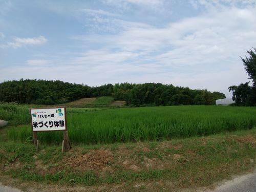 げんきの郷の田んぼ「中干し」_d0120421_16230018.jpg
