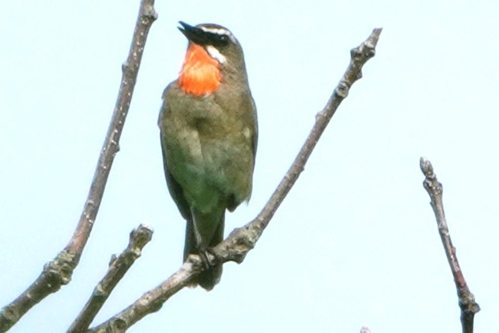 野鳥トレ 217 北海道探鳥地放浪の旅 その1_b0227552_12271257.jpg