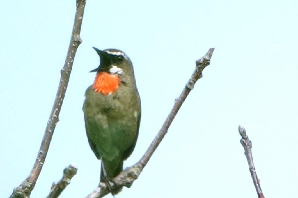野鳥トレ 217 北海道探鳥地放浪の旅 その1_b0227552_12271386.jpg