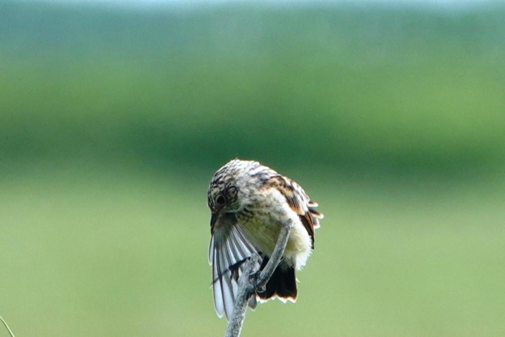 野鳥トレ 217 北海道探鳥地放浪の旅 その1_b0227552_12571104.jpg