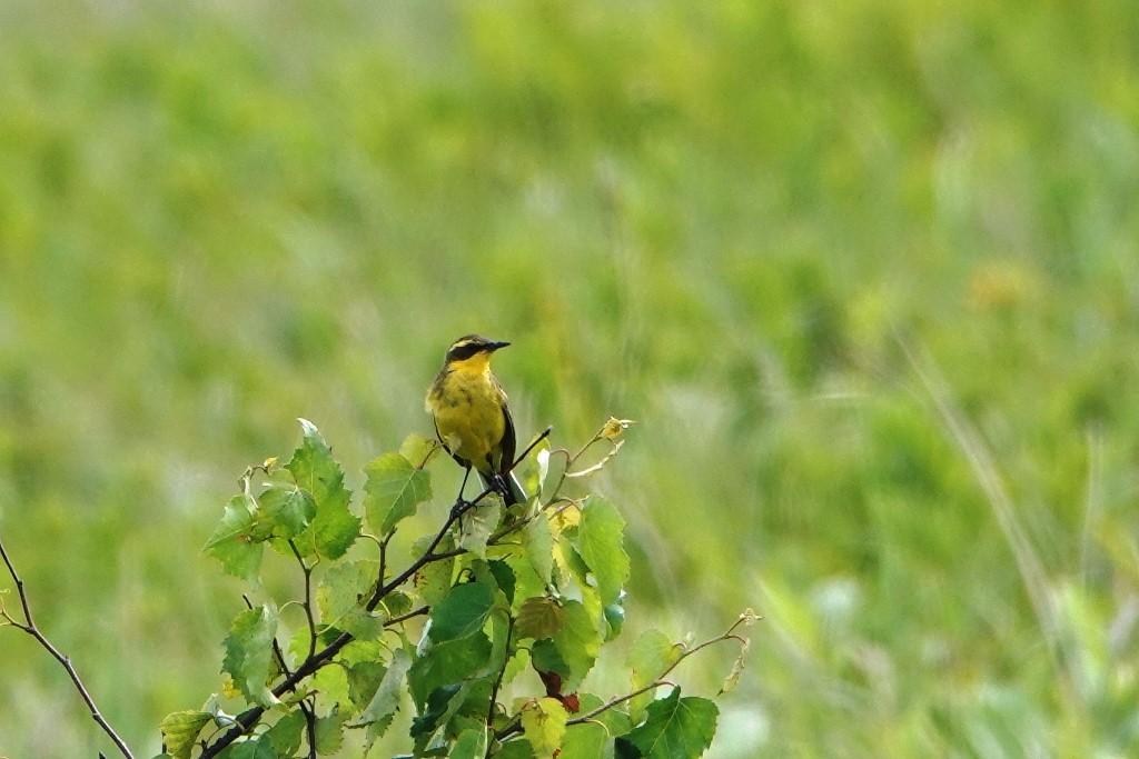 野鳥トレ 217 北海道探鳥地放浪の旅 その1_b0227552_12571258.jpg