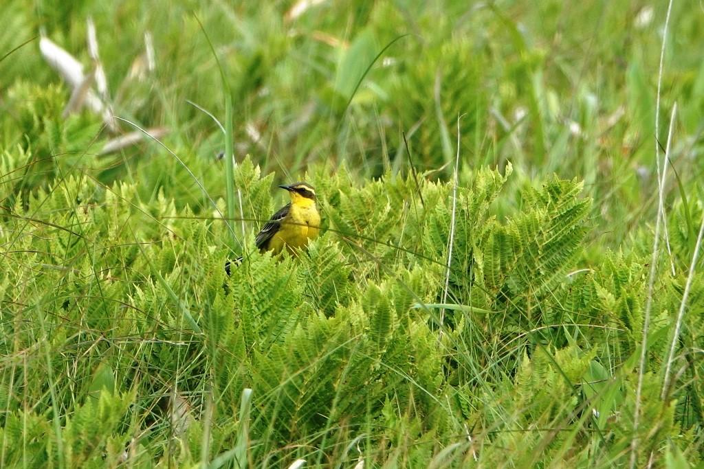 野鳥トレ 217 北海道探鳥地放浪の旅 その1_b0227552_12571264.jpg