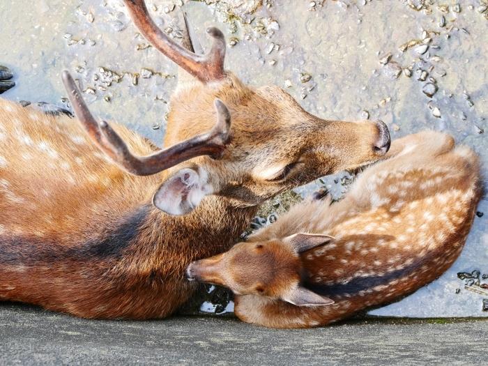 お城の動物園で、先月、小鹿が生まれる  2020-08-09 00:00_b0093754_21451340.jpg