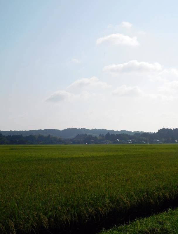 タマアジサイ(玉紫陽花)_e0024554_00054577.jpg
