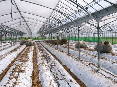 """熊本限定栽培品種のイチゴ『熊紅(ゆうべに)』 令和2年度も美味しさと""""安全性""""にこだわり栽培するために_a0254656_17093023.jpg"""