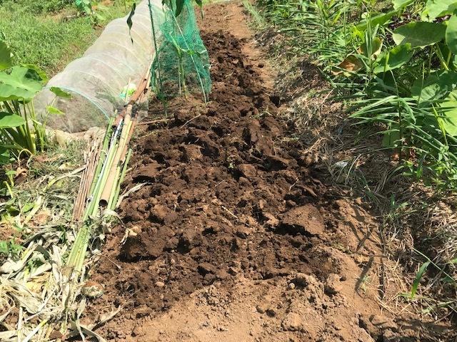 里芋水やり、ネギ土寄せ、大根土づくりなど8・3~7_c0014967_14493158.jpg