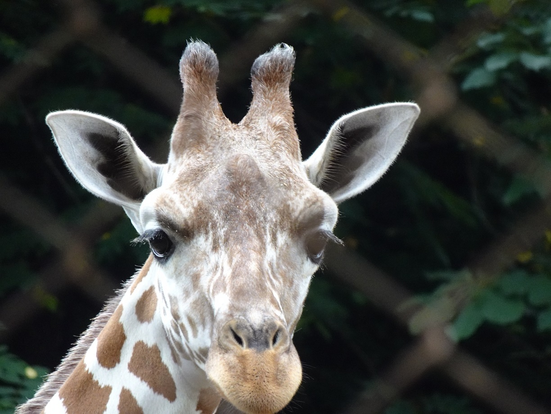 茶臼山動物園(^^)_a0211886_00034517.jpg