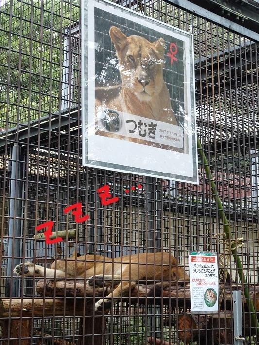 茶臼山動物園(^^)_a0211886_00103063.jpg