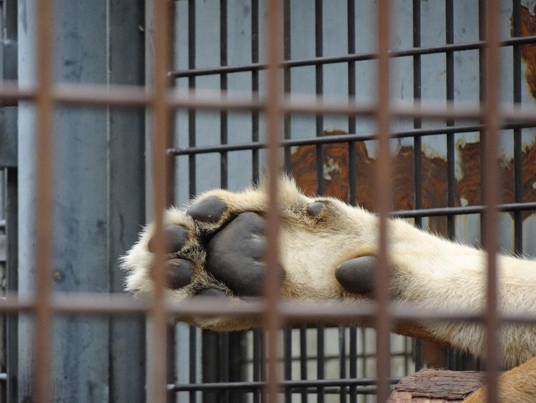 茶臼山動物園(^^)_a0211886_00141408.jpg