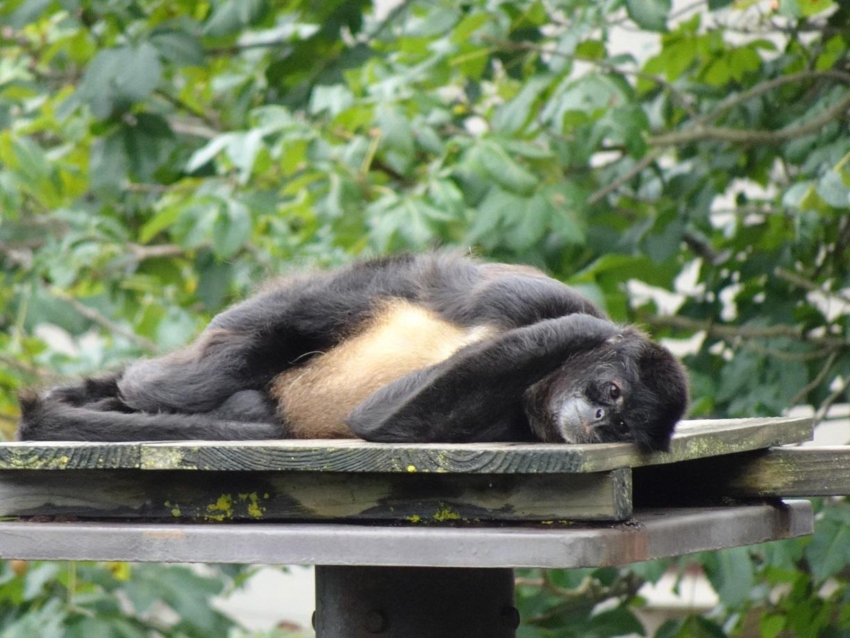 茶臼山動物園(^^)_a0211886_00153087.jpg