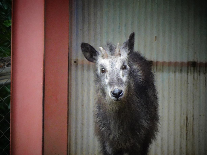 茶臼山動物園(^^)_a0211886_00182097.jpg