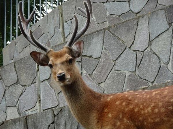 茶臼山動物園(^^)_a0211886_00204267.jpg