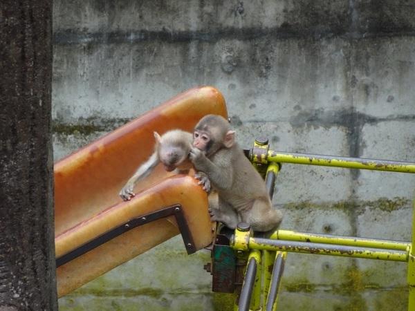 茶臼山動物園(^^)_a0211886_00361506.jpg