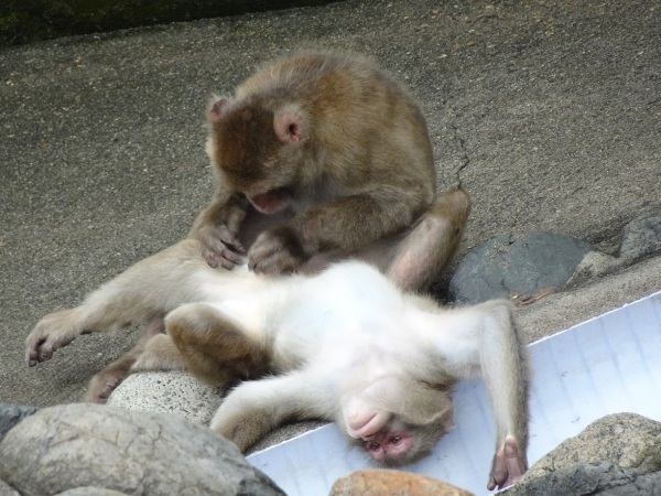 茶臼山動物園(^^)_a0211886_00405244.jpg