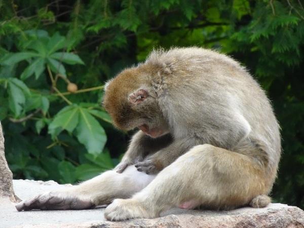 茶臼山動物園(^^)_a0211886_00422899.jpg