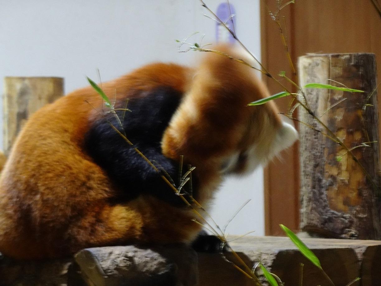 茶臼山動物園(^^)_a0211886_00494854.jpg