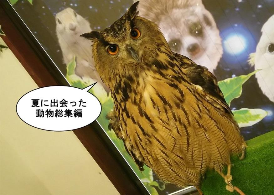 【ただの雑記】今シーズン出会った動物総集編(?)_f0205396_13474981.jpg
