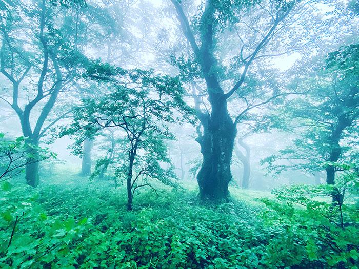 筑波山 / iPhone 11_c0334533_10573102.jpg