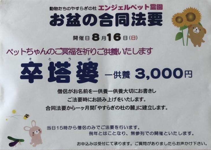 夏景色_b0308135_15203484.jpeg