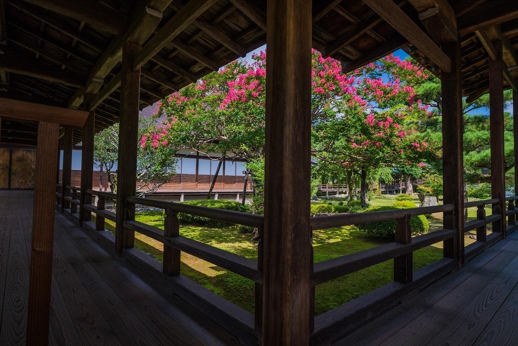 大覚寺の百日紅_e0363038_19245890.jpg