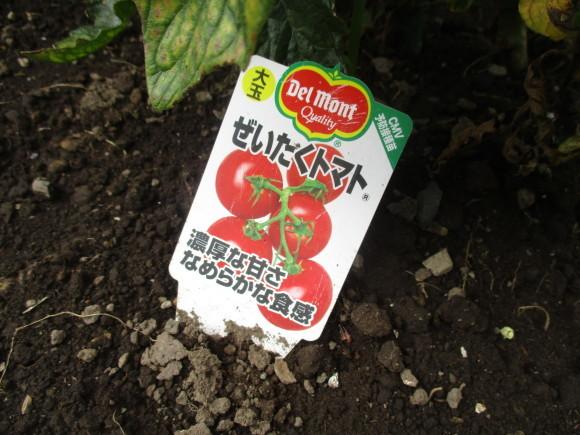 ポタジェのミニトマトでセミドライトマト&戴いた大粒のブルーベリー_a0279743_16410260.jpg