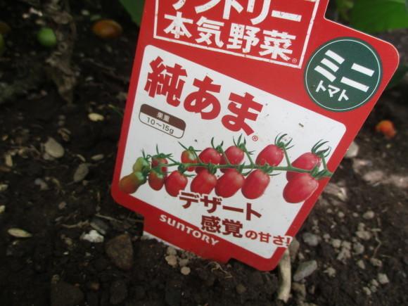 ポタジェのミニトマトでセミドライトマト&戴いた大粒のブルーベリー_a0279743_16414206.jpg
