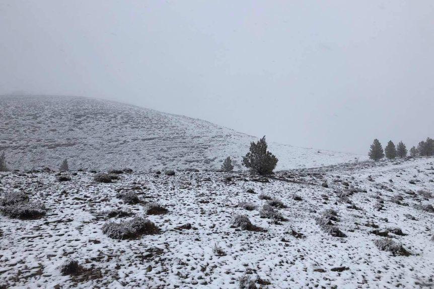 雪だよ!雪!_d0368073_15274383.jpg