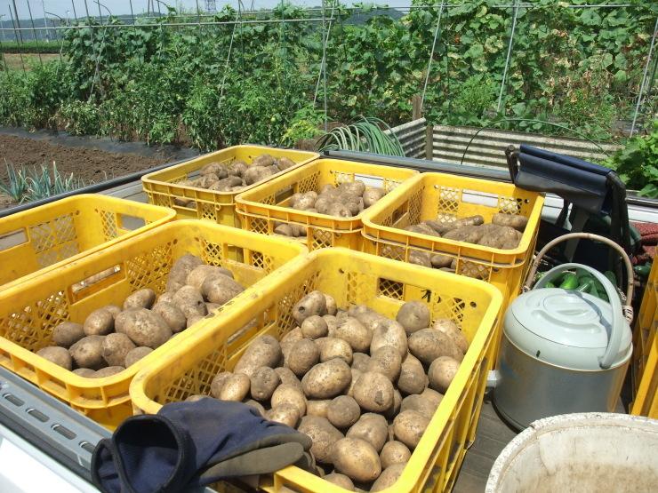 ジャガイモ掘り_d0225575_17175236.jpg