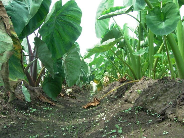 ジャガイモ掘り_d0225575_17472233.jpg