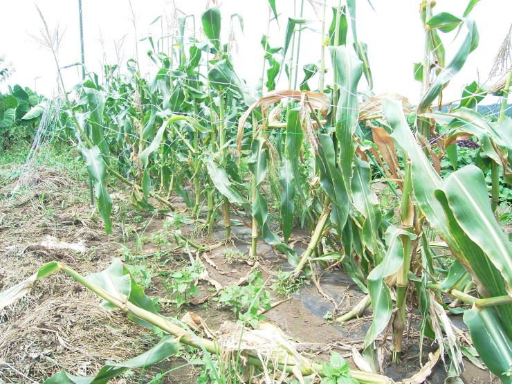 ジャガイモ掘り_d0225575_17475709.jpg