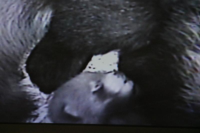 ヒマワリちゃんの赤ちゃん_a0110787_14292924.jpg