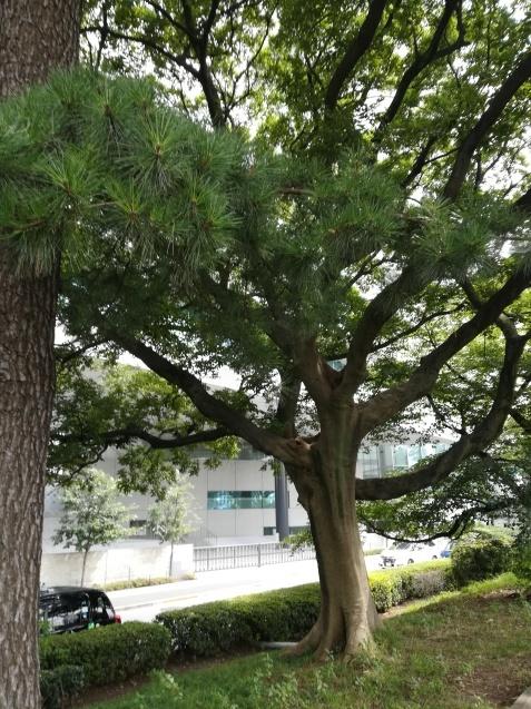 ぐるり神楽坂さんぽ_c0284210_18564324.jpg
