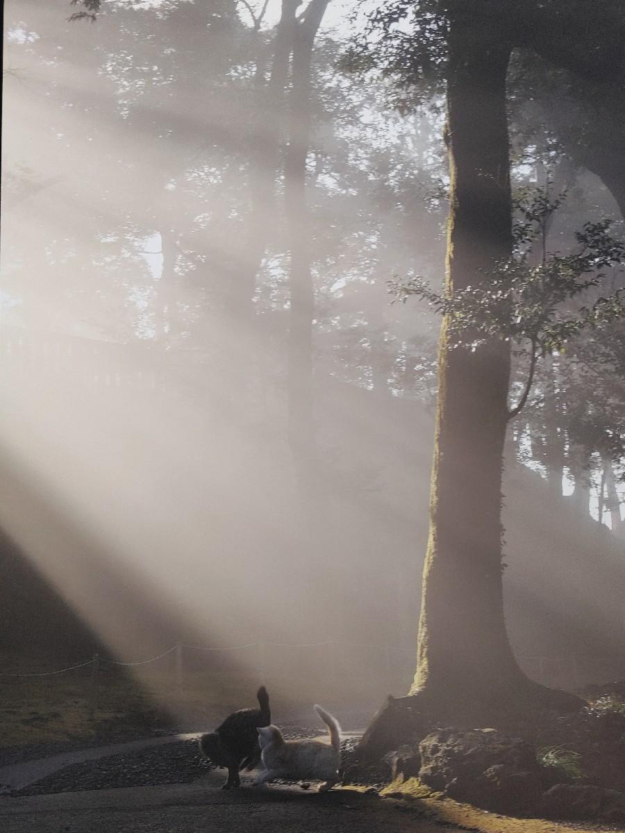 『猫の恋、昴は天にの..._f0138311_18043589.jpg