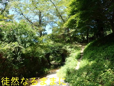 旧門谷小学校・アサギマダラ飛来準備_d0285540_21494318.jpg