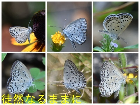 旧門谷小学校・アサギマダラ飛来準備_d0285540_21551430.jpg