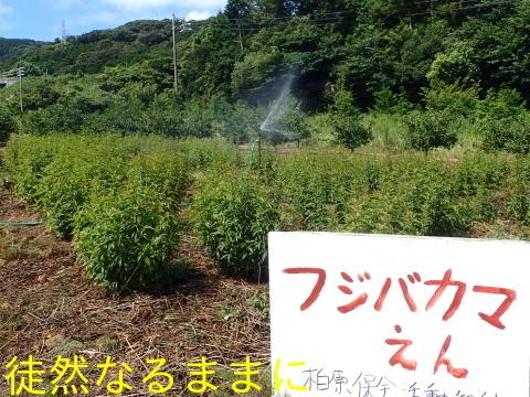 旧門谷小学校・アサギマダラ飛来準備_d0285540_21592814.jpg