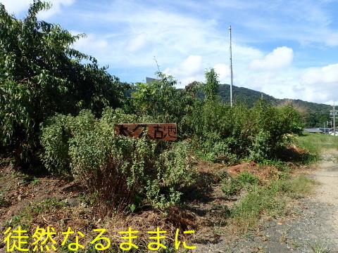 旧門谷小学校・アサギマダラ飛来準備_d0285540_22023644.jpg