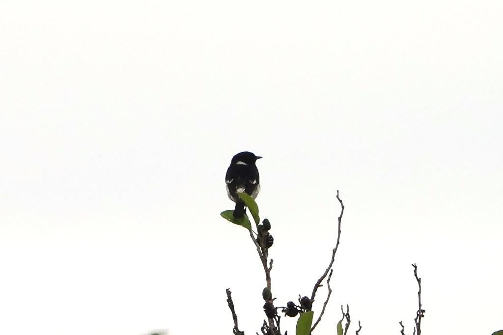 野鳥トレ 218 北海道探鳥地放浪の旅 その2_b0227552_21282670.jpg