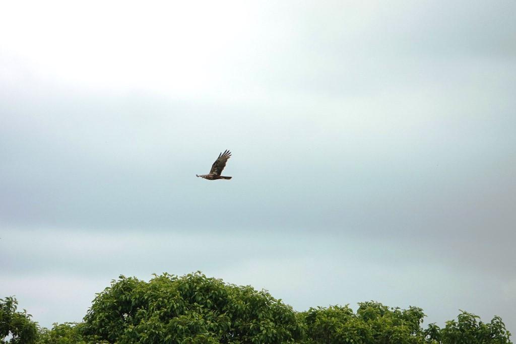 野鳥トレ 218 北海道探鳥地放浪の旅 その2_b0227552_21362596.jpg