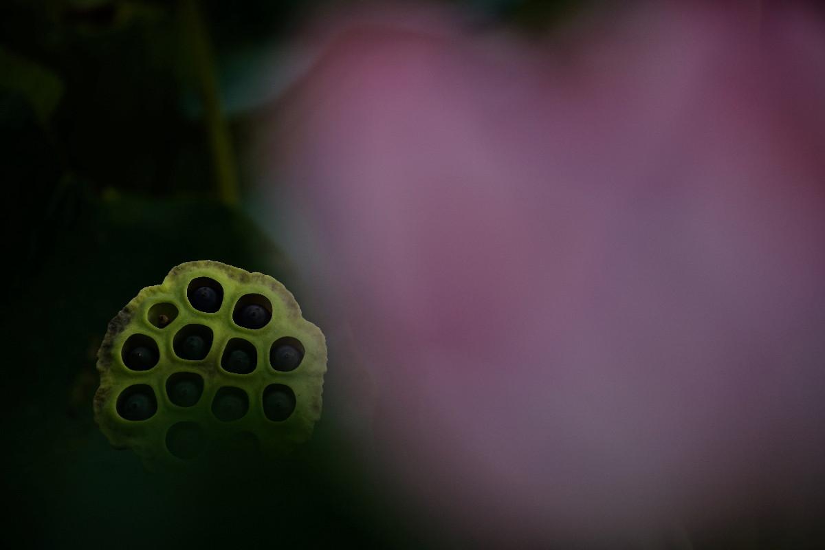 花より果托・・・その③_e0071967_1350372.jpg