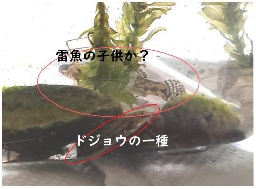 黒目川は、淡水魚の宝庫 _d0096268_19261336.jpg