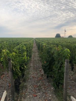 Bordeaux France september 2019 ⑦ Medoc 格付け1級 chateau Haut-Brion_a0036499_12503980.jpg