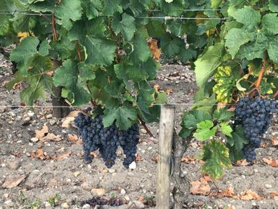 Bordeaux France september 2019 ⑦ Medoc 格付け1級 chateau Haut-Brion_a0036499_12504058.jpg