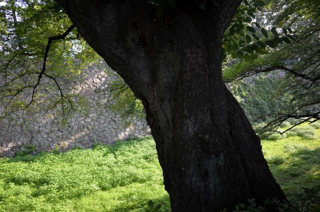 名古屋城の堀_a0262507_04503506.jpg