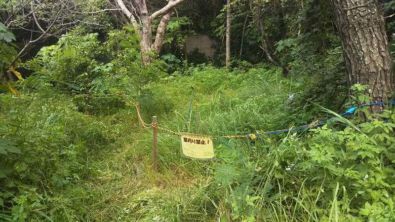 くんじゃん山学校 あの時植えたどんぐりの樹の今!_f0121321_17592094.jpg