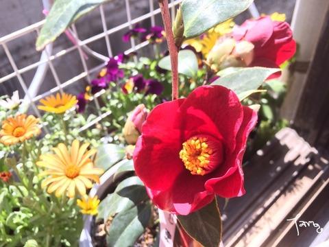 2014年の植物集_c0404636_22162633.jpg