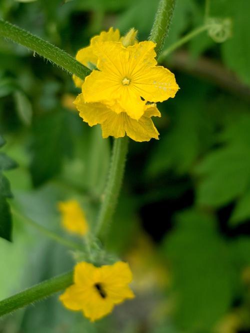 野菜の花_d0005250_19585646.jpg