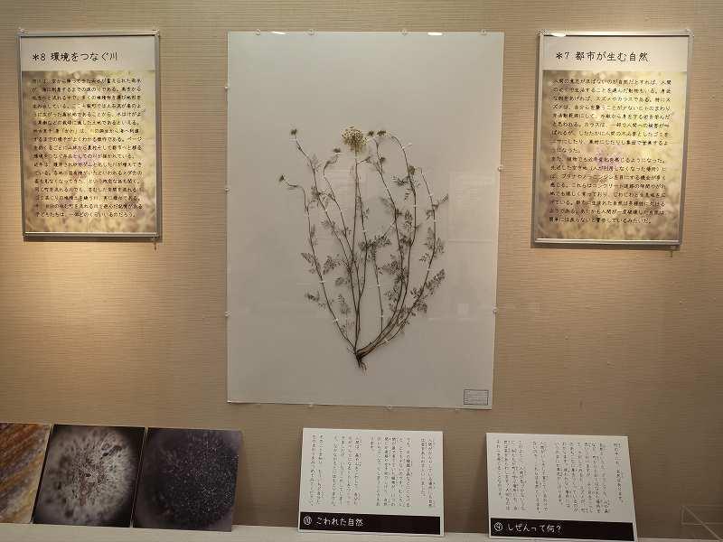 七飯町歴史館テーマ展開催してます_f0228071_14201397.jpg