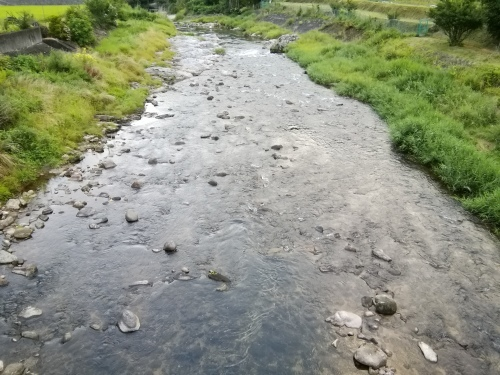 2020/8/11     水位観測  (槻の木橋より)_b0111189_05411220.jpg