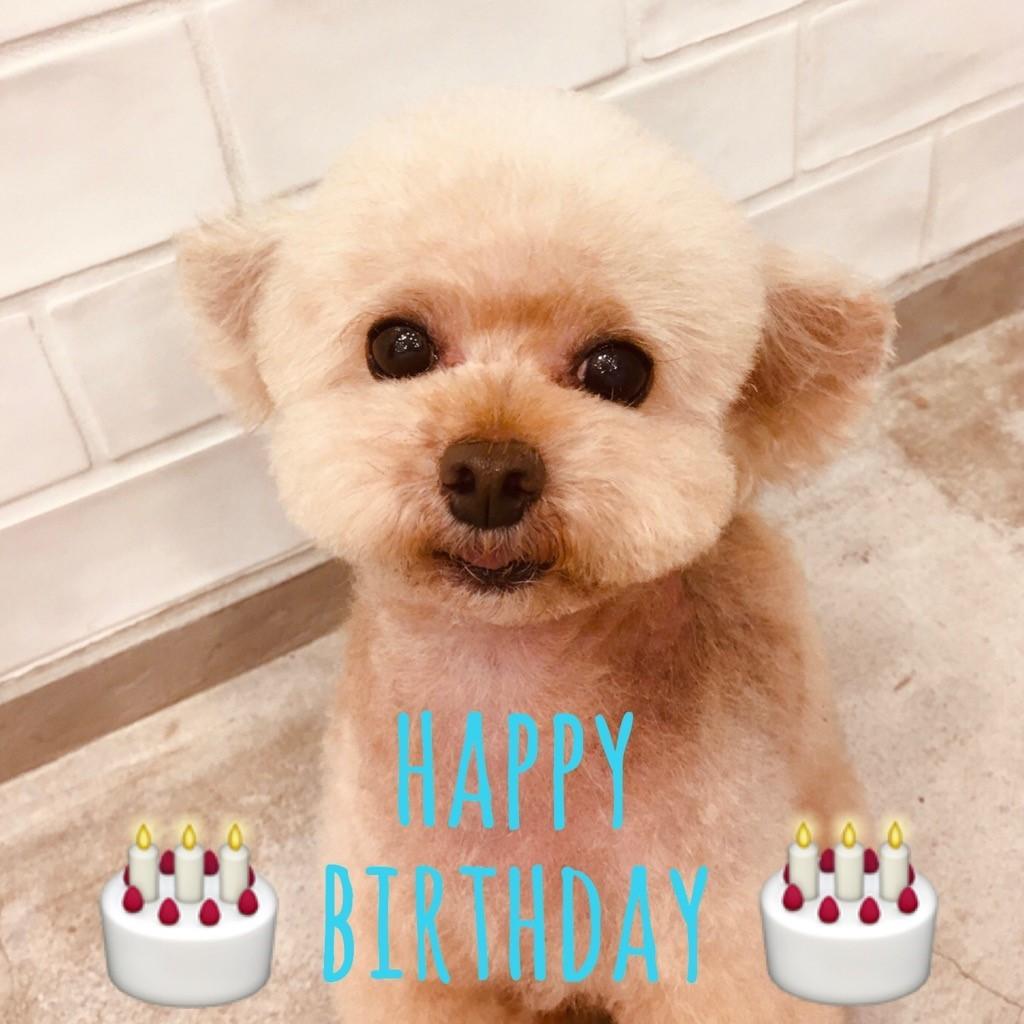 ☆ Happy Birthday ・ ポッポくん ☆_d0060413_17314802.jpg